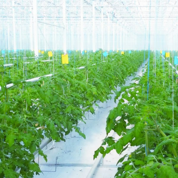 Smart agriculture - DIMAN Intelligent (Shenzhen) Co , Ltd